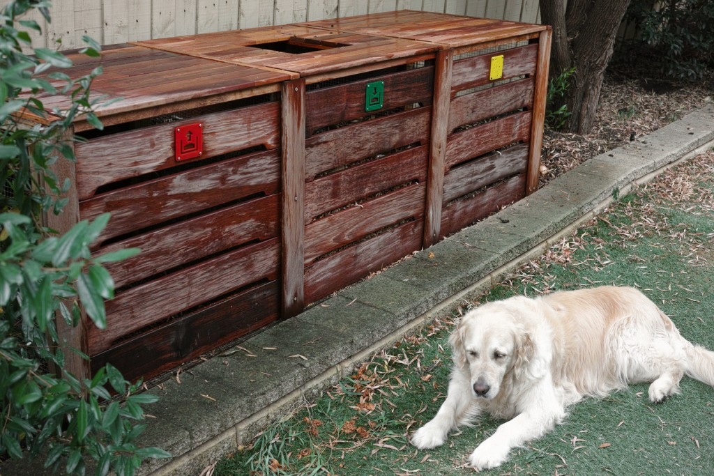 Compost bin and dog